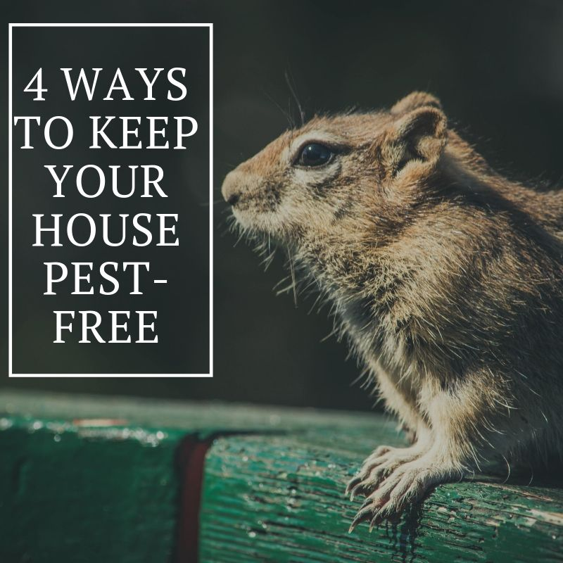 4 Ways to Keep Your House Pest-Free